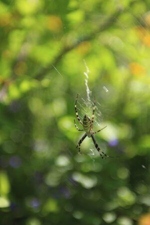 gimmick: Spider