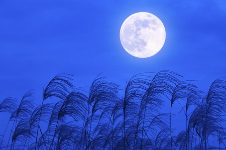 満月と日本語のパンパス グラス 写真素材