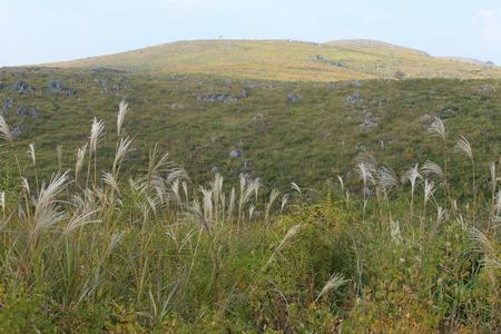 Akiyoshi plateau in autumn