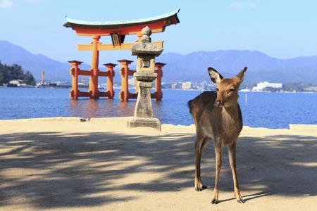 Miyajima Torii and deer