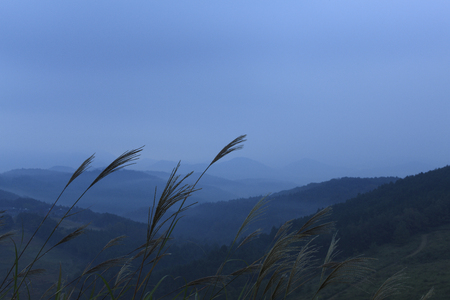 frail: From the Akiyoshi plateau mountains Stock Photo
