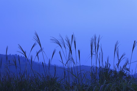 diluted: From the Akiyoshi plateau mountains Stock Photo