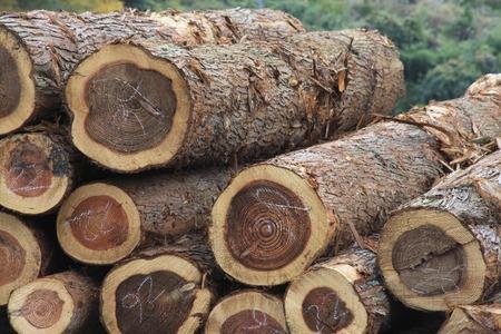 목재 통나무
