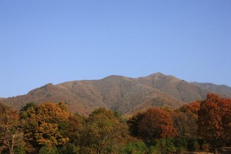 silver maple: Autumn hiruzen