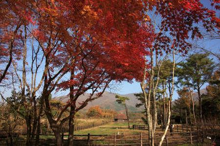 Autumn hiruzen