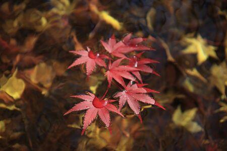 Fall foliage and water Stock Photo