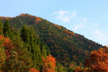 Foliage of the hiruzen Highland