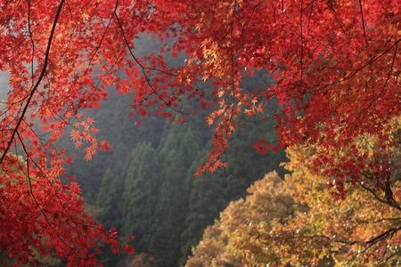 Okutsu Valley autumn leaves Stock Photo