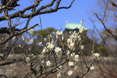 osaka castle: Osaka Castle and plum Grove