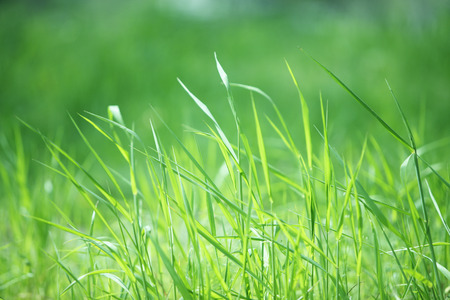 Meadow grass 版權商用圖片 - 40107226