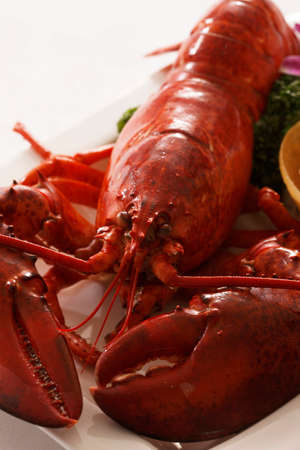 omar: Omar shrimp