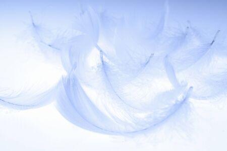 pluma blanca: Plumas de blanco