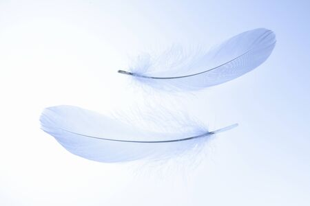 白い羽 写真素材