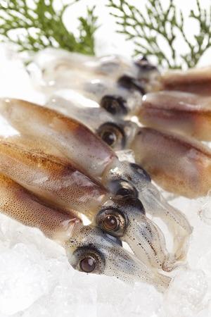 firefly: Raw Firefly squid