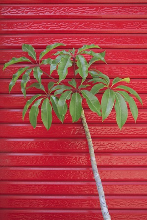 shutter: Red shutter and plant Stock Photo