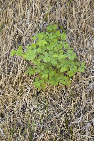 grew: It grew the bank clover