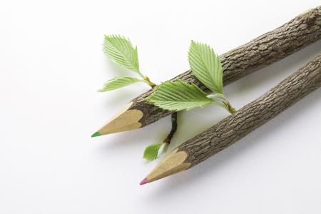 young leaves: Colored pencil and young leaves