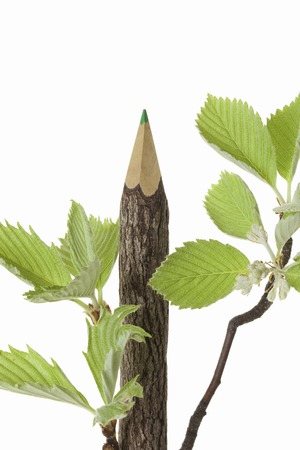 sorbus: Colored pencil on wood Stock Photo