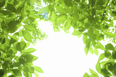 leaves frame: Young leaves frame