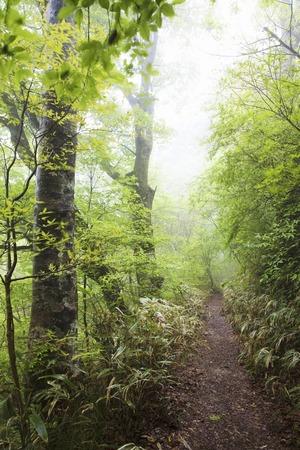 shrub: Beech Mountain