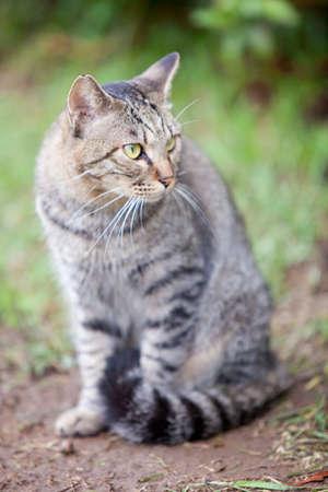 living thing: CAT
