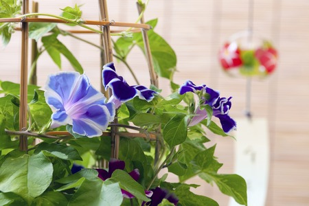 wind chimes: Wind chimes and morning glory Stock Photo