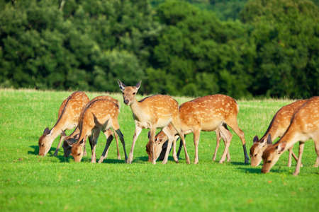 substantial: Deer of Nara Prefecture substantial Stock Photo