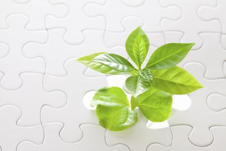 seedlings: Coffee seedlings and puzzle piece