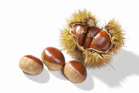Chestnut Weißer Hintergrund