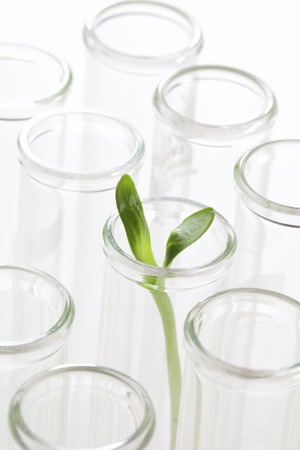 genetic information: Sprout of breeding image
