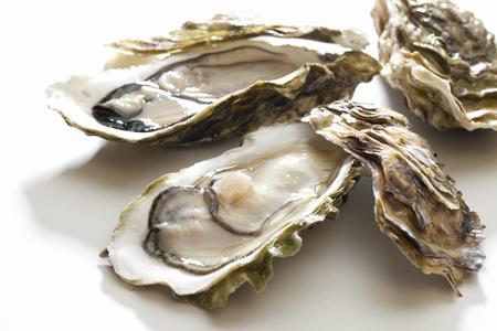 Oysters Zdjęcie Seryjne