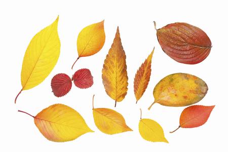 Various fallen leaves Stock Photo