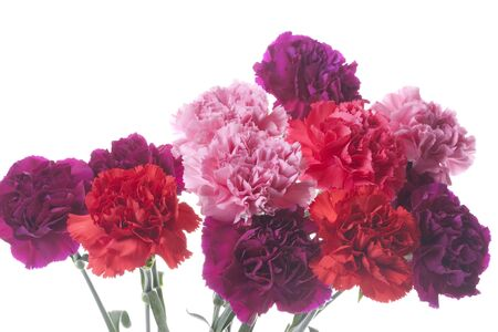 annual events: Carnation
