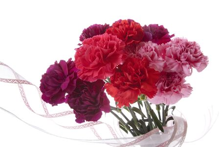 carnations: Mothers day carnations Stock Photo