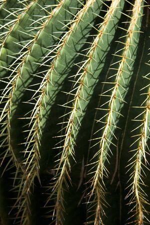 killer: Money killer cactus