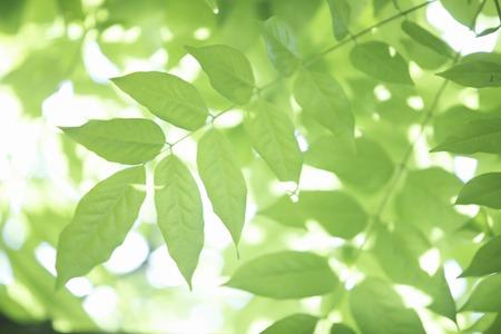 eco green: Fuji of fresh green Stock Photo