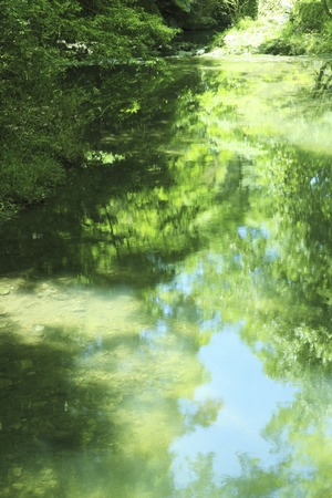 su yüzeyi: Fresh green reflected on the water surface