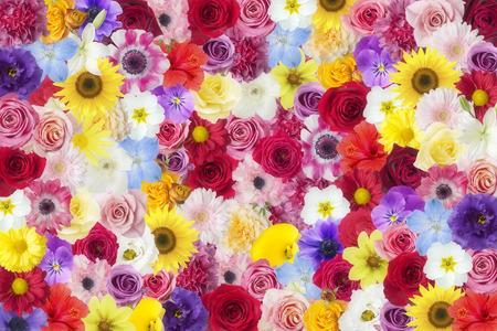 phantasy: Flower garden Stock Photo