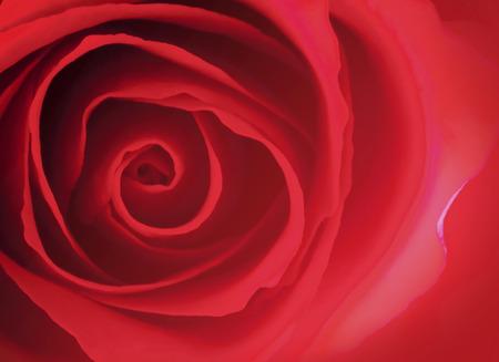phantasy: Rose flowers
