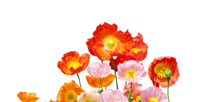 call of nature: Poppy