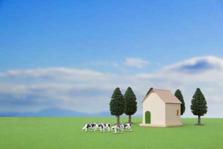 rancho: Ranch