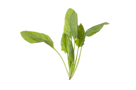 Spinach Reklamní fotografie