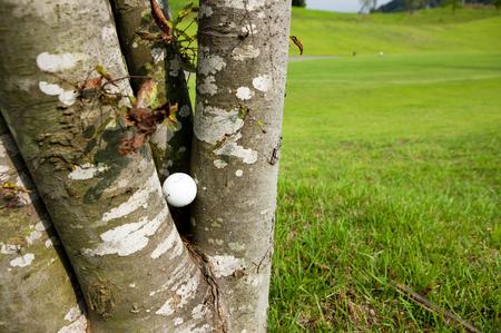 happening: Golf ball stuck in tree Stock Photo