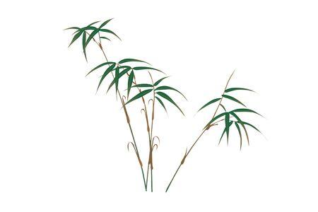 compound: Bamboo