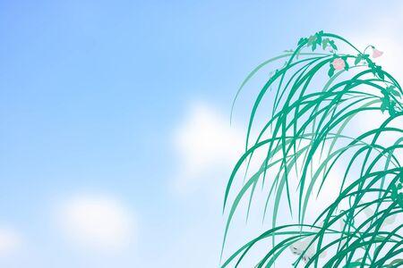 white lily: Hierba de la pampa y la enredadera y el lirio blanco