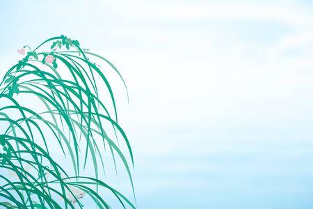 lirio blanco: Hierba de la pampa y la enredadera y el lirio blanco