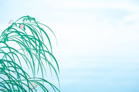 bindweed: Pampas grass and bindweed and the white lily