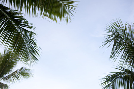 quietude: Palm trees