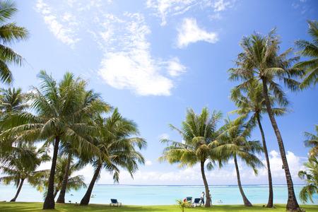 Palm trees and beach Stockfoto