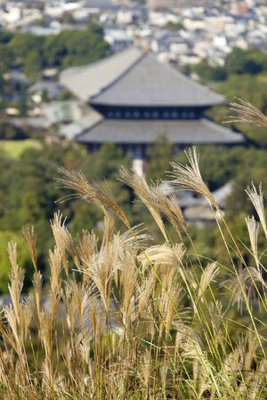 buddhist temple roof: Pampas grass and the Todaiji Hall of the Great Buddha